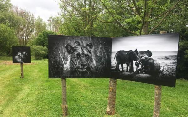 expo photo fine art atelier images et cie