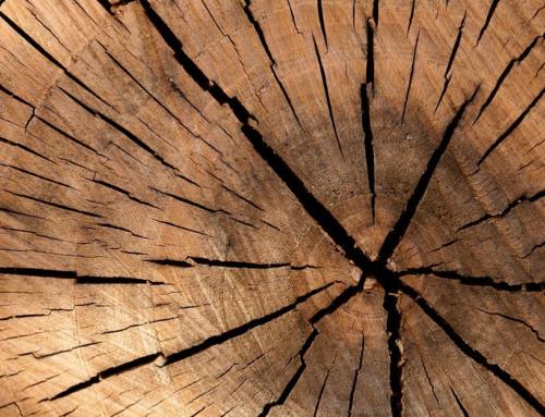PLV, Impression, Communication visuelle : pourquoi le bois est à la mode ?